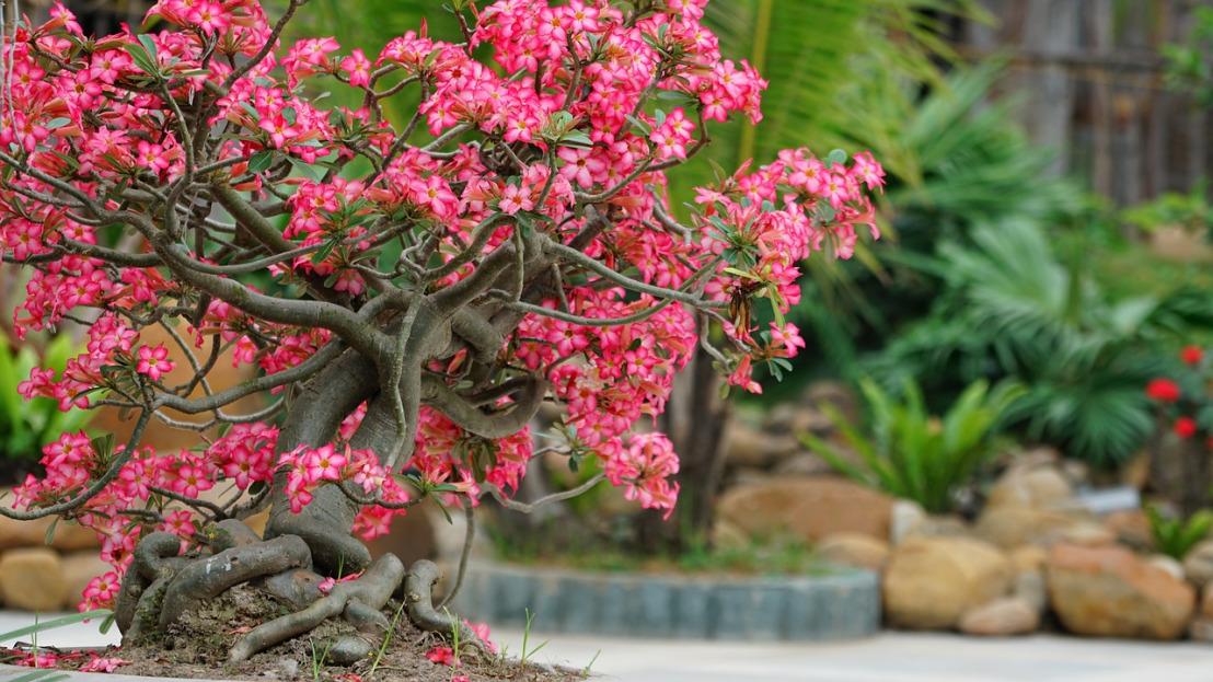 flower-3364692_1280