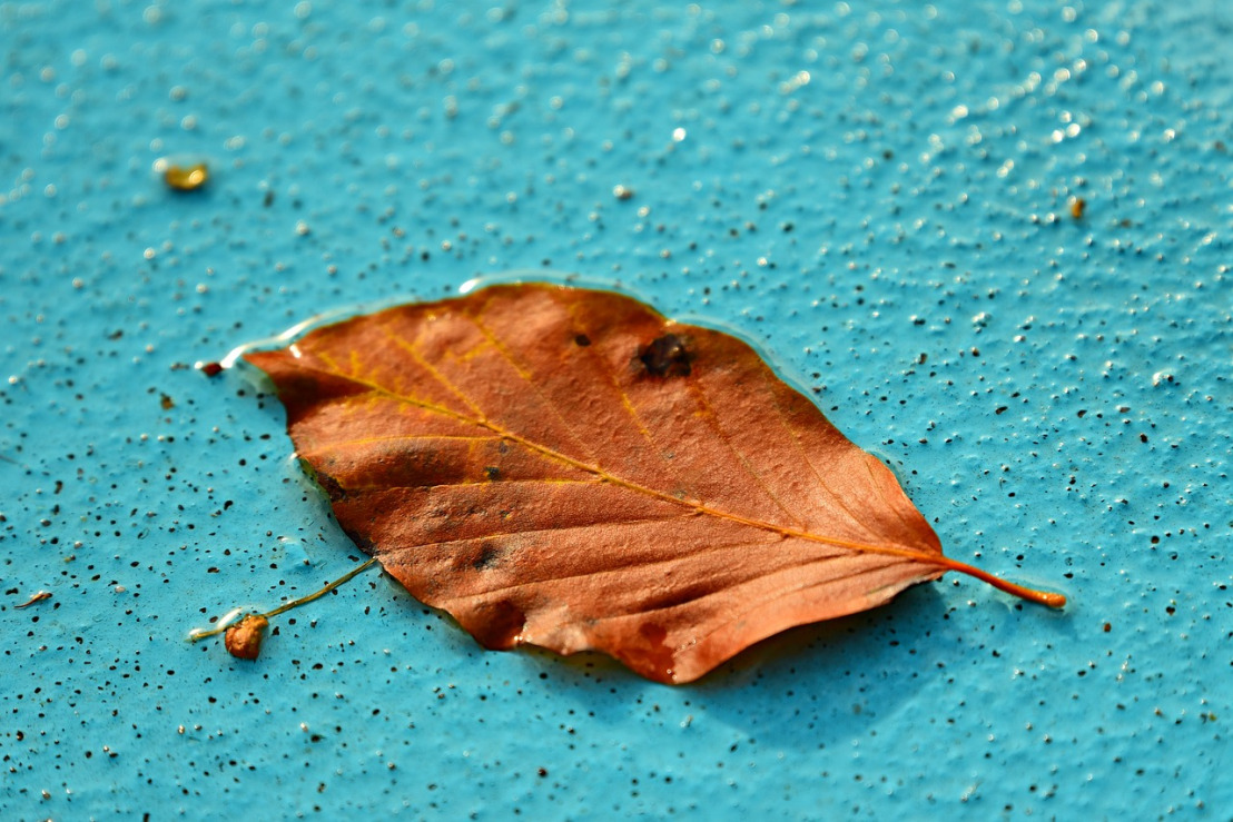 autumn-leaf-3723538_1280