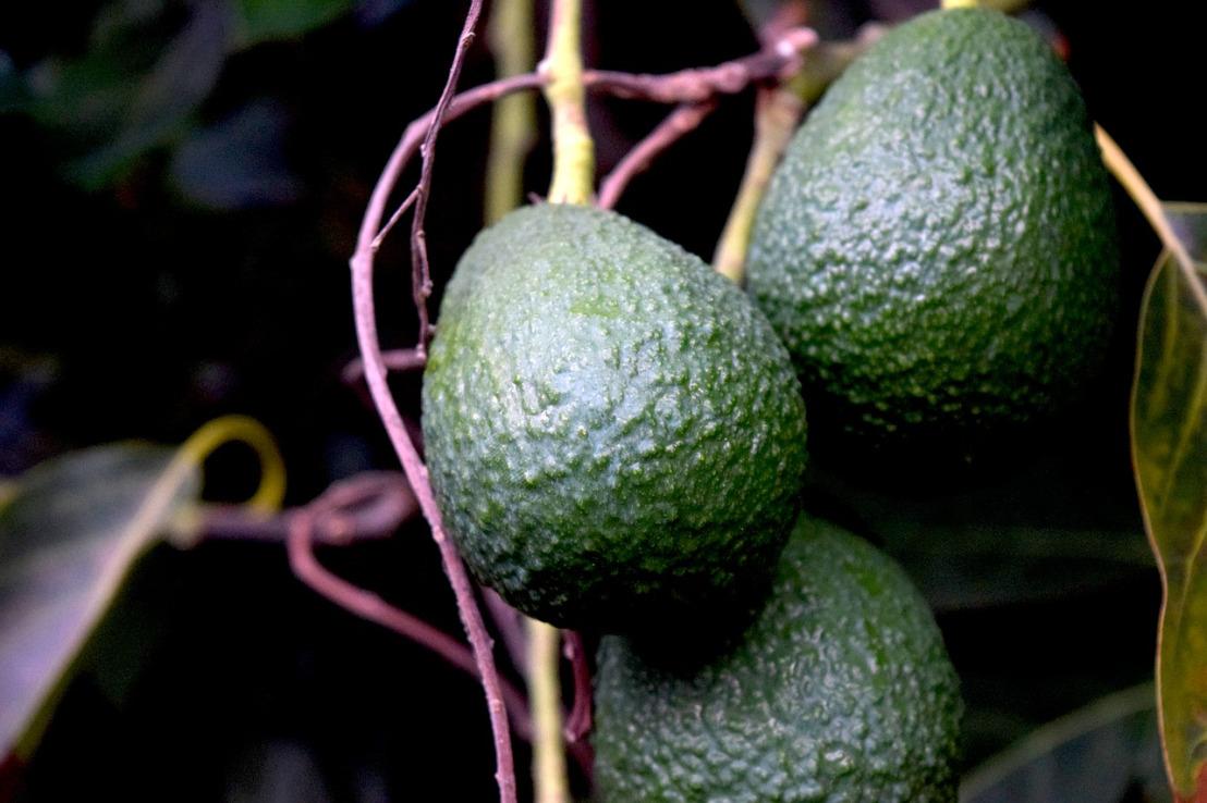 avocados-4361272_1280