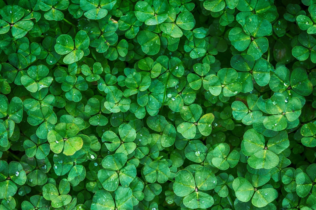 clover-1225988_1280(1)