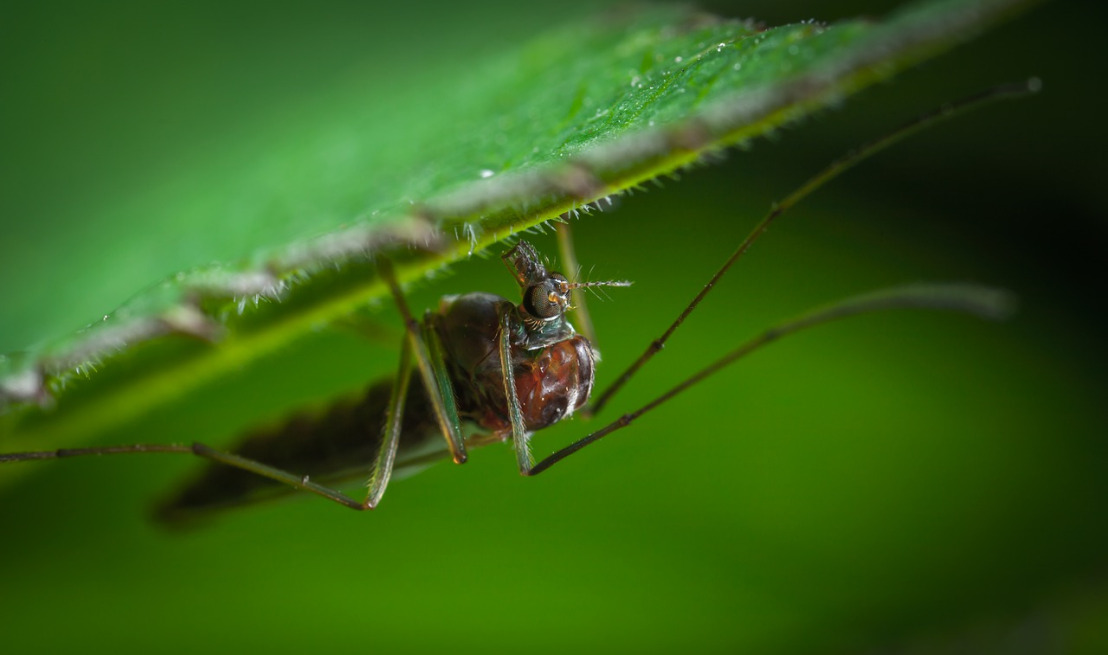 insect-3079504_1280(1)