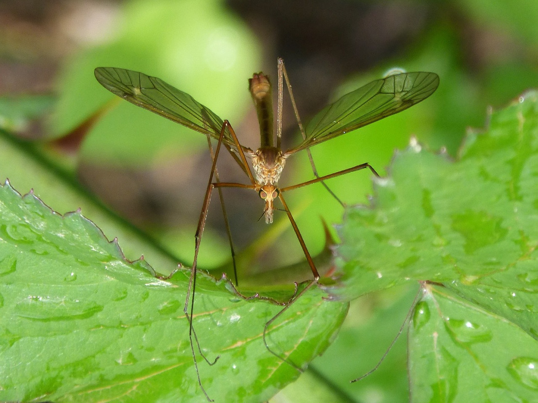 mosquito-1384020_1280